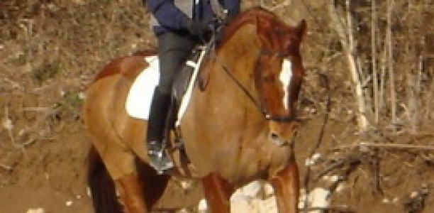 Jahač izoblikuje konja – 1. poglavje