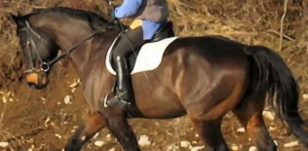 Jahač izoblikuje konja – 2. poglavje