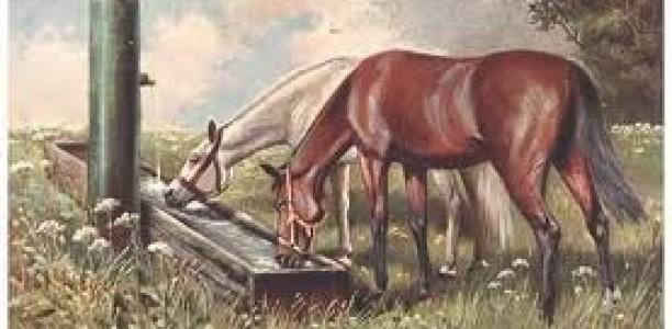 Jedilnik za konjske gurmane