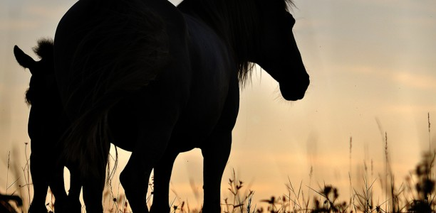 Kako konju nuditi čim bolj naravno okolje?