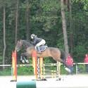 rekreacijski konj