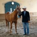 Plemenski QH palomino žrebec