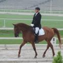 PRODAM konja za dresuro