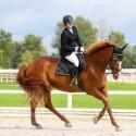 KWPN kobila